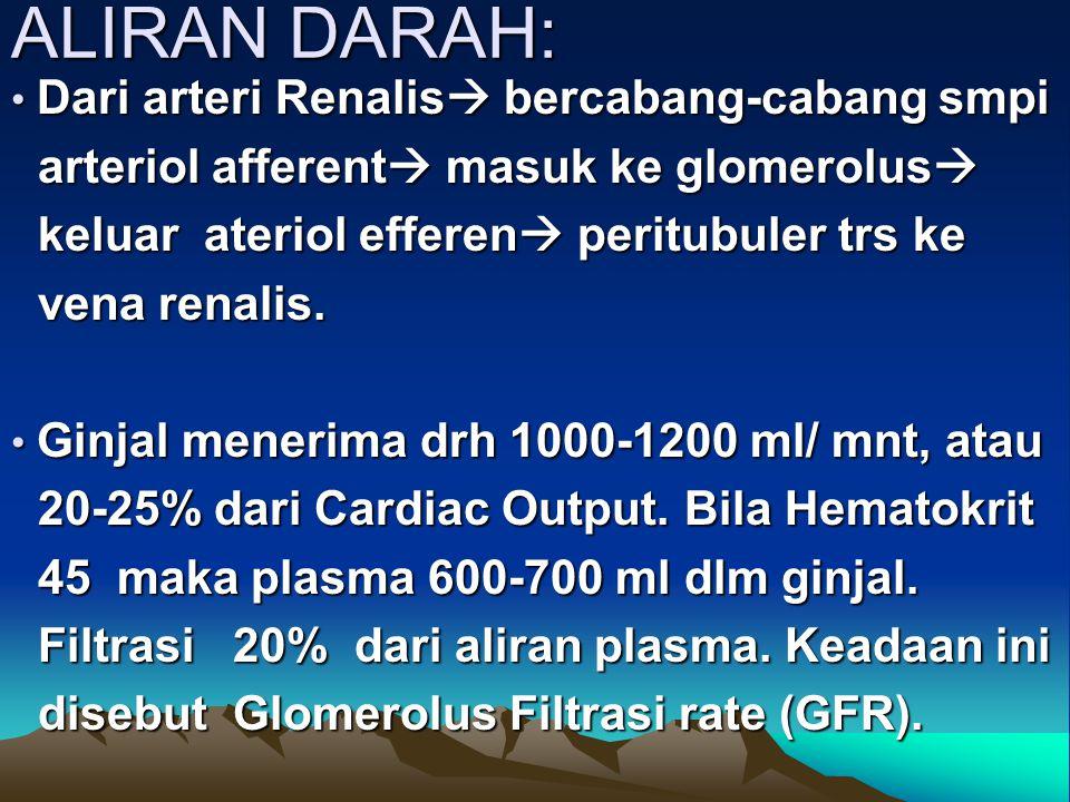 ALIRAN DARAH: arteriol afferent masuk ke glomerolus