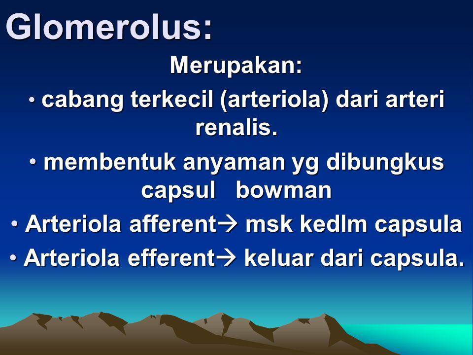 Glomerolus: Merupakan: membentuk anyaman yg dibungkus capsul bowman
