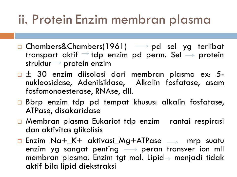 ii. Protein Enzim membran plasma