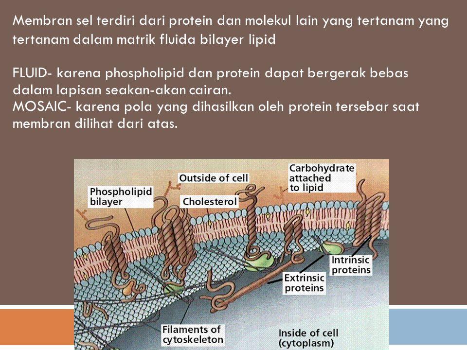 Membran sel terdiri dari protein dan molekul lain yang tertanam yang tertanam dalam matrik fluida bilayer lipid