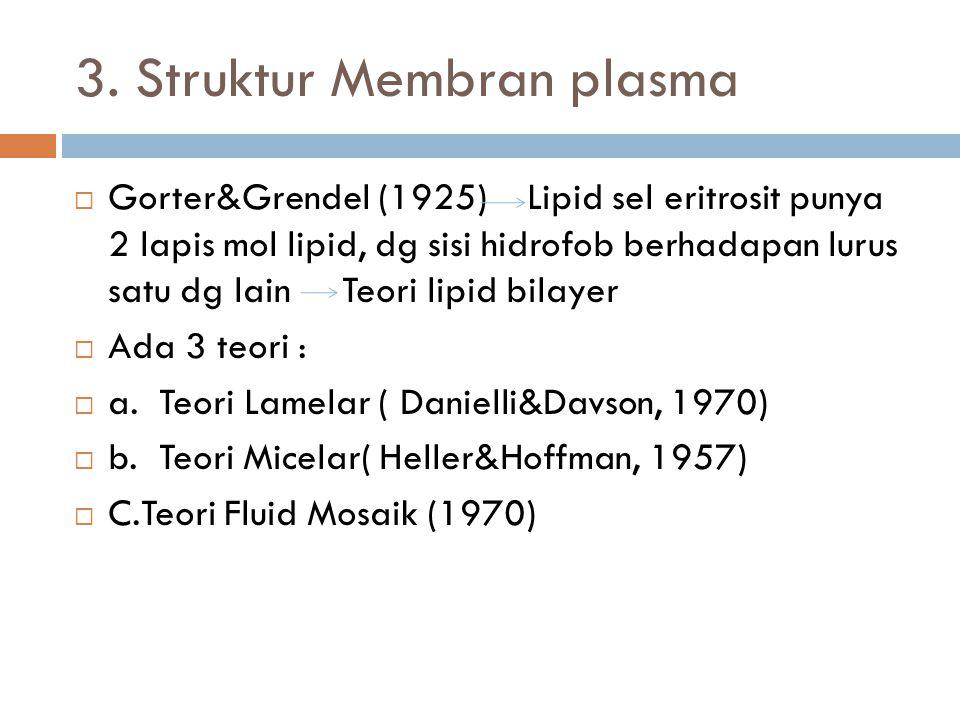 3. Struktur Membran plasma