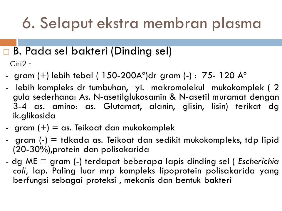 6. Selaput ekstra membran plasma