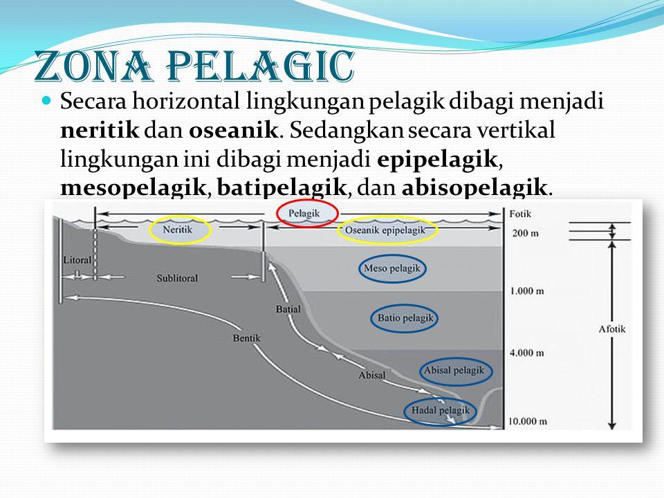Zona Pelagic
