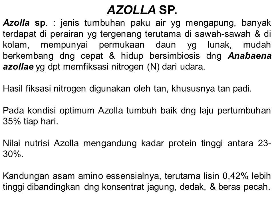 AZOLLA SP.