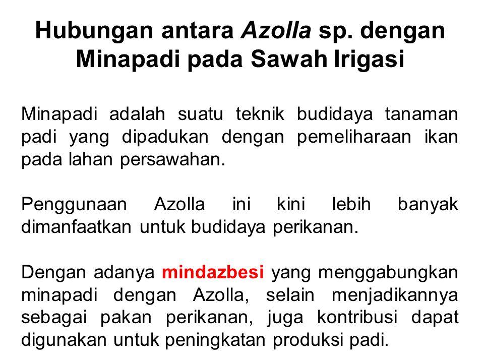 Hubungan antara Azolla sp. dengan Minapadi pada Sawah Irigasi