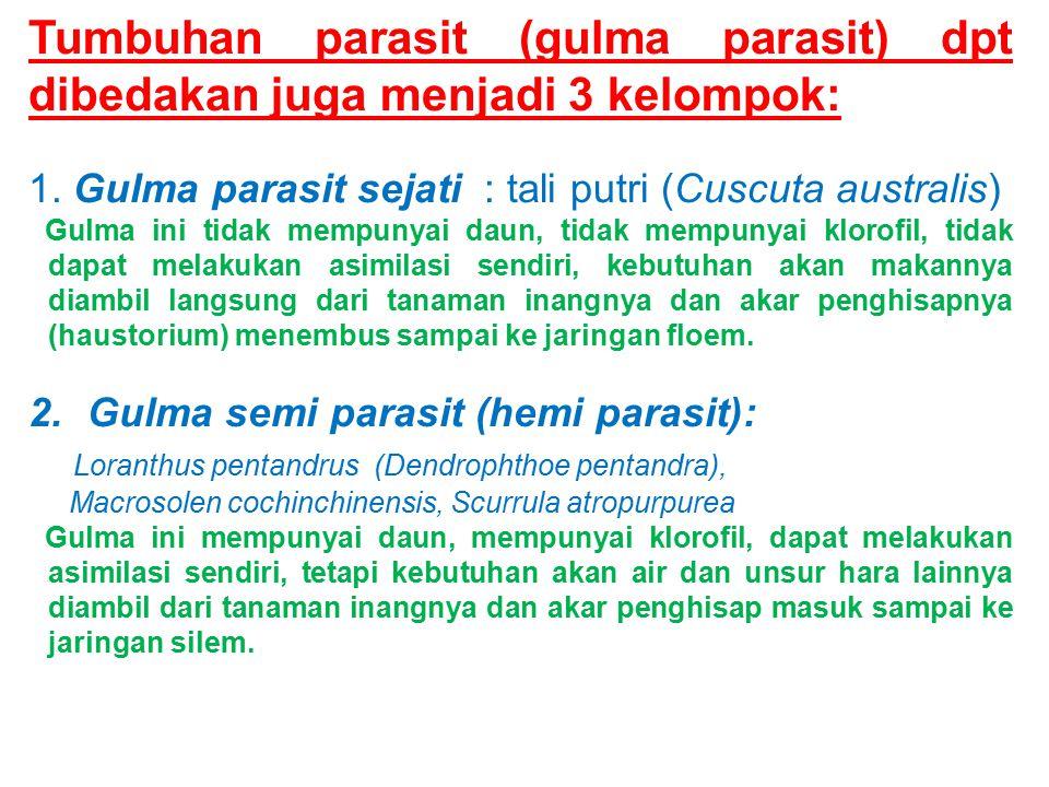Tumbuhan parasit (gulma parasit) dpt dibedakan juga menjadi 3 kelompok: