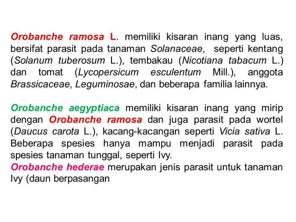 Orobanche ramosa L. memiliki kisaran inang yang luas, bersifat parasit pada tanaman Solanaceae, seperti kentang (Solanum tuberosum L.), tembakau (Nicotiana tabacum L.) dan tomat (Lycopersicum esculentum Mill.), anggota Brassicaceae, Leguminosae, dan beberapa familia lainnya.