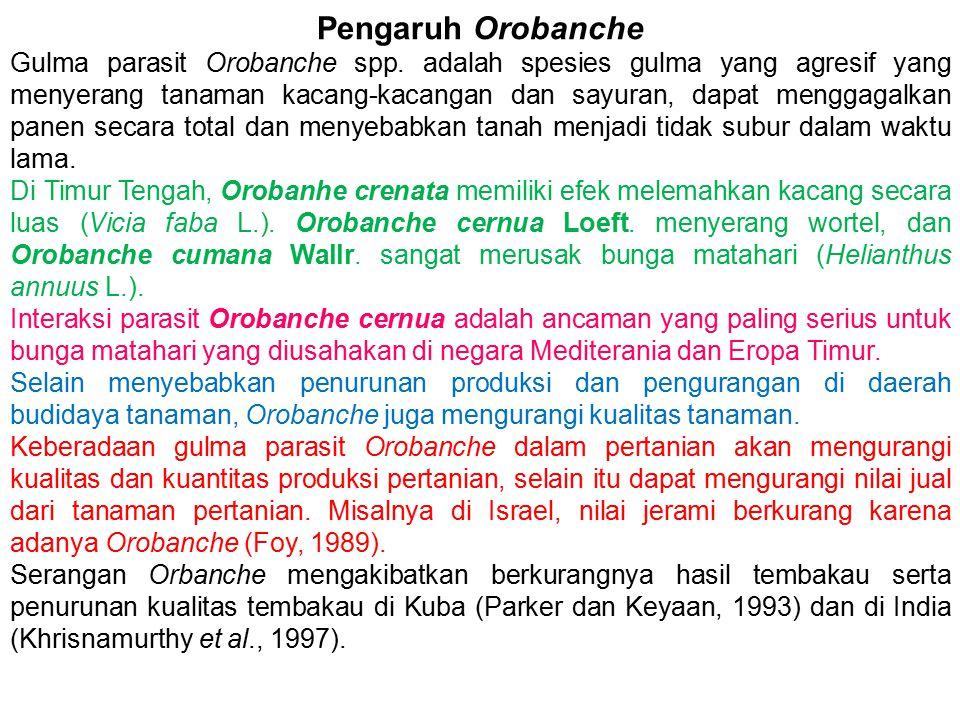 Pengaruh Orobanche