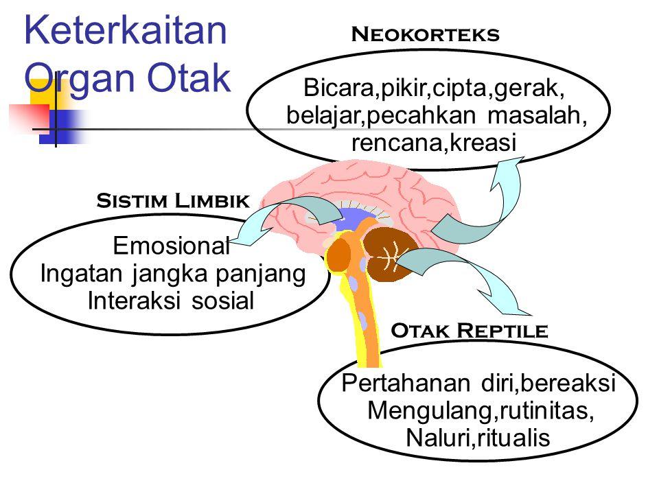 Keterkaitan Organ Otak