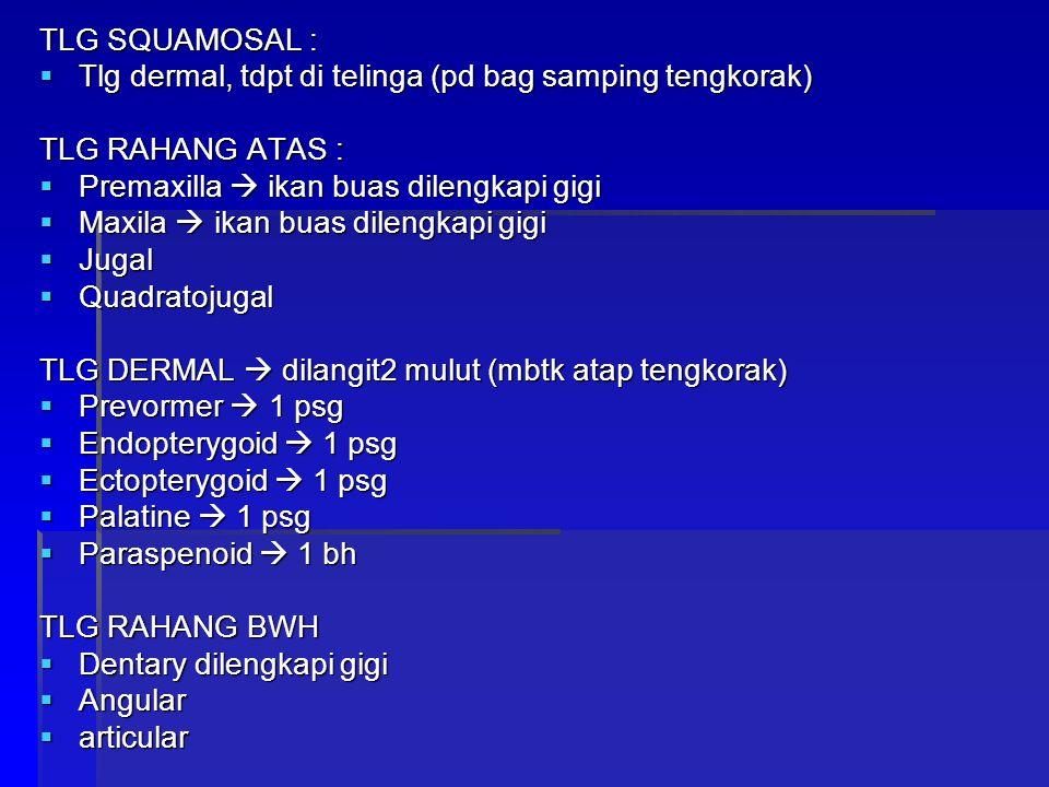 TLG SQUAMOSAL : Tlg dermal, tdpt di telinga (pd bag samping tengkorak) TLG RAHANG ATAS : Premaxilla  ikan buas dilengkapi gigi.