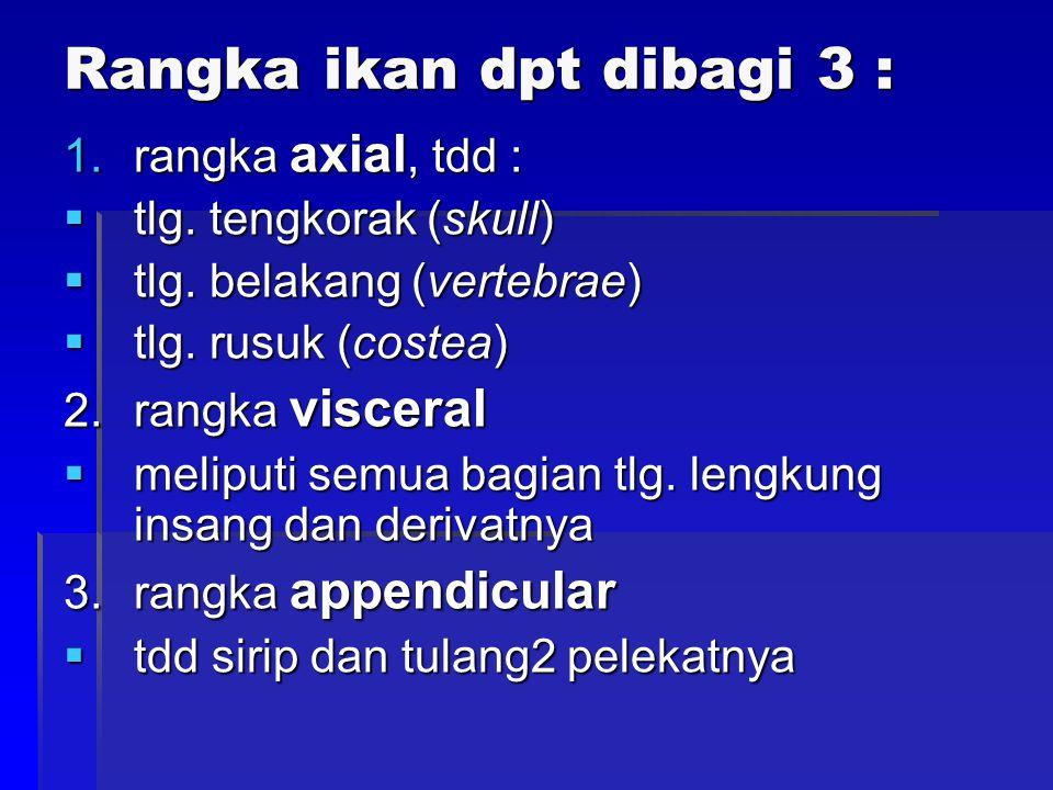 Rangka ikan dpt dibagi 3 :