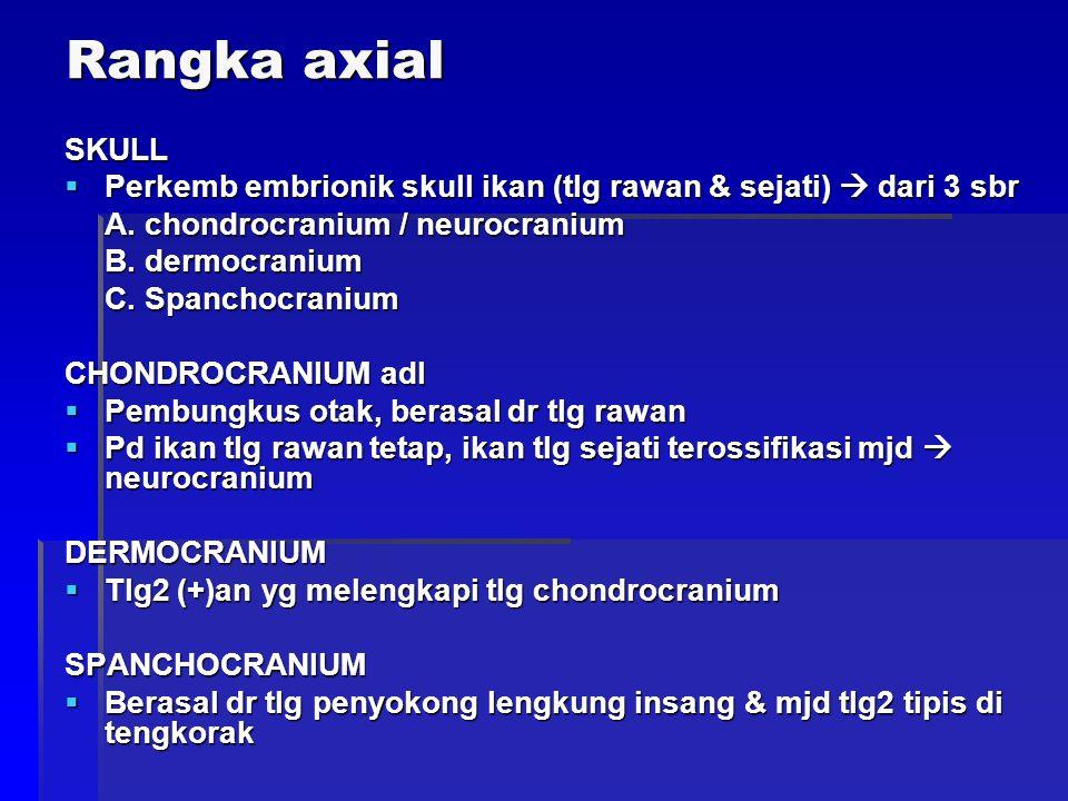Rangka axial SKULL. Perkemb embrionik skull ikan (tlg rawan & sejati)  dari 3 sbr. A. chondrocranium / neurocranium.
