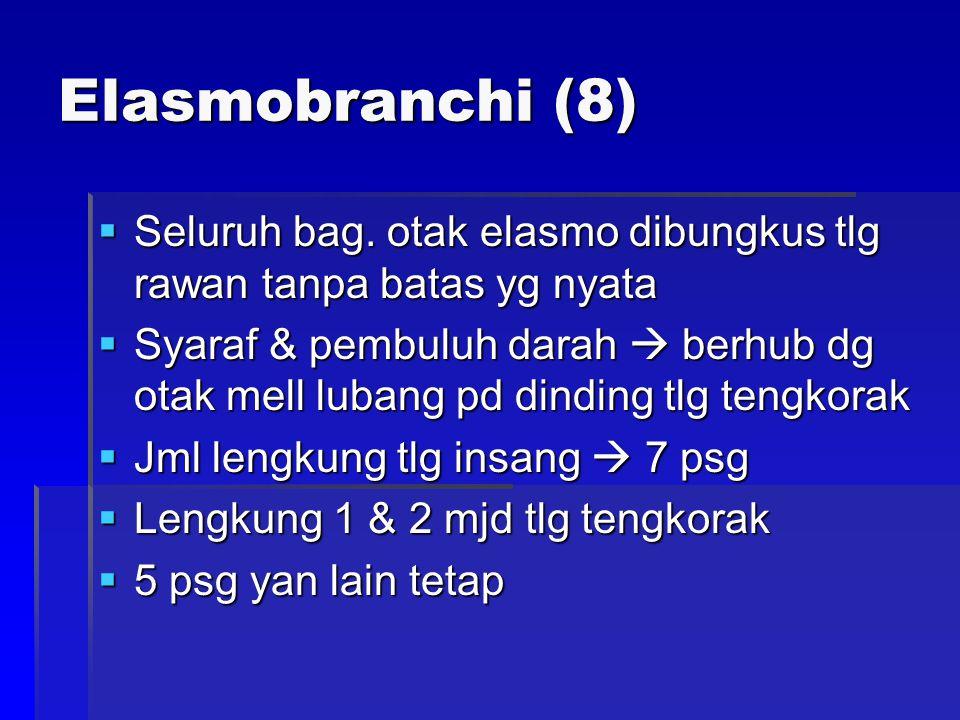 Elasmobranchi (8) Seluruh bag. otak elasmo dibungkus tlg rawan tanpa batas yg nyata.