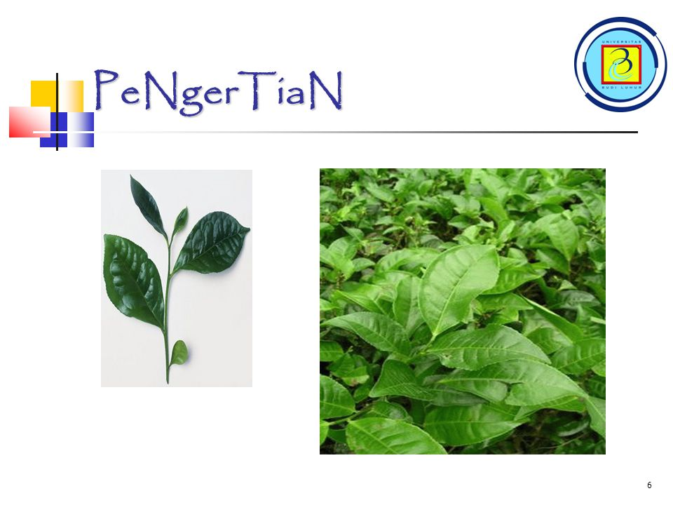 PeNgerTiaN 6