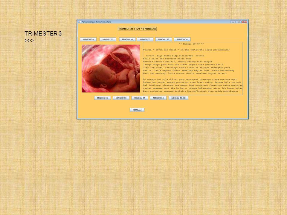 TRIMESTER 3 >>>