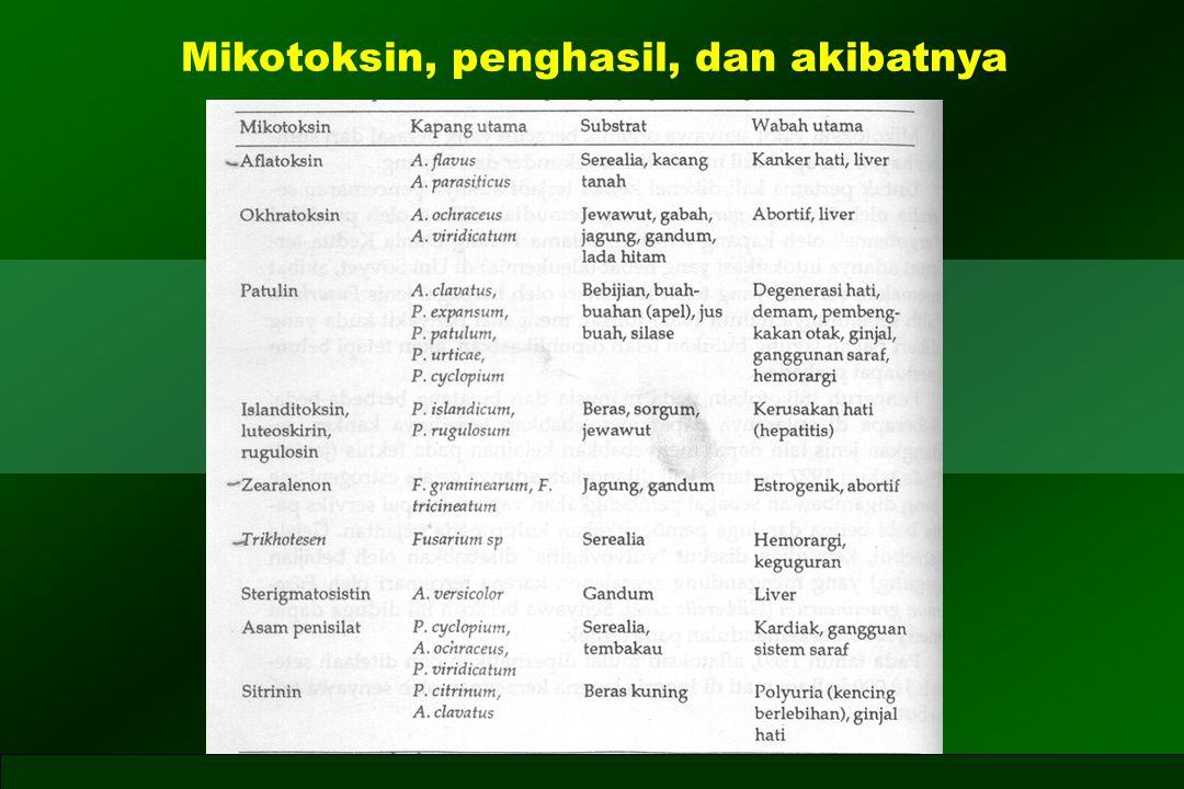 Mikotoksin, penghasil, dan akibatnya