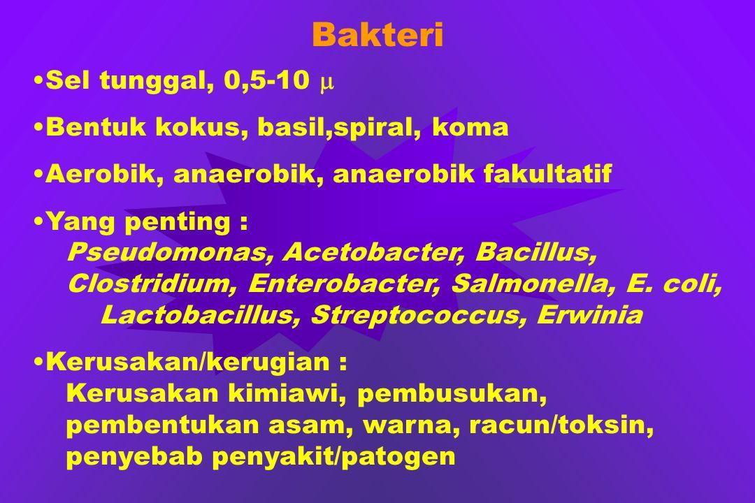 Bakteri Sel tunggal, 0,5-10 m Bentuk kokus, basil,spiral, koma