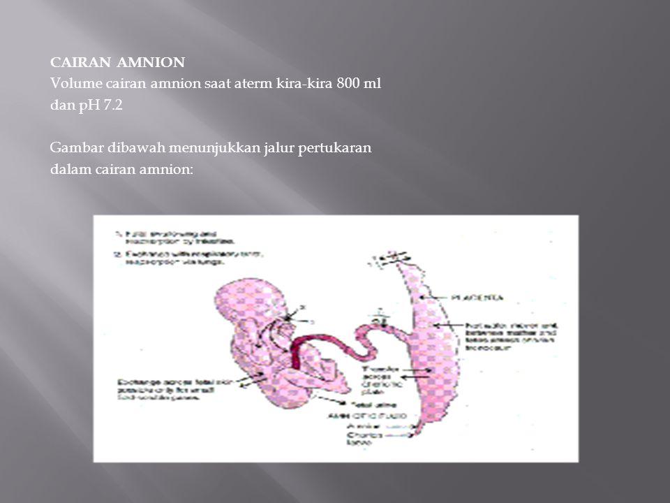 CAIRAN AMNION Volume cairan amnion saat aterm kira-kira 800 ml. dan pH 7.2. Gambar dibawah menunjukkan jalur pertukaran.
