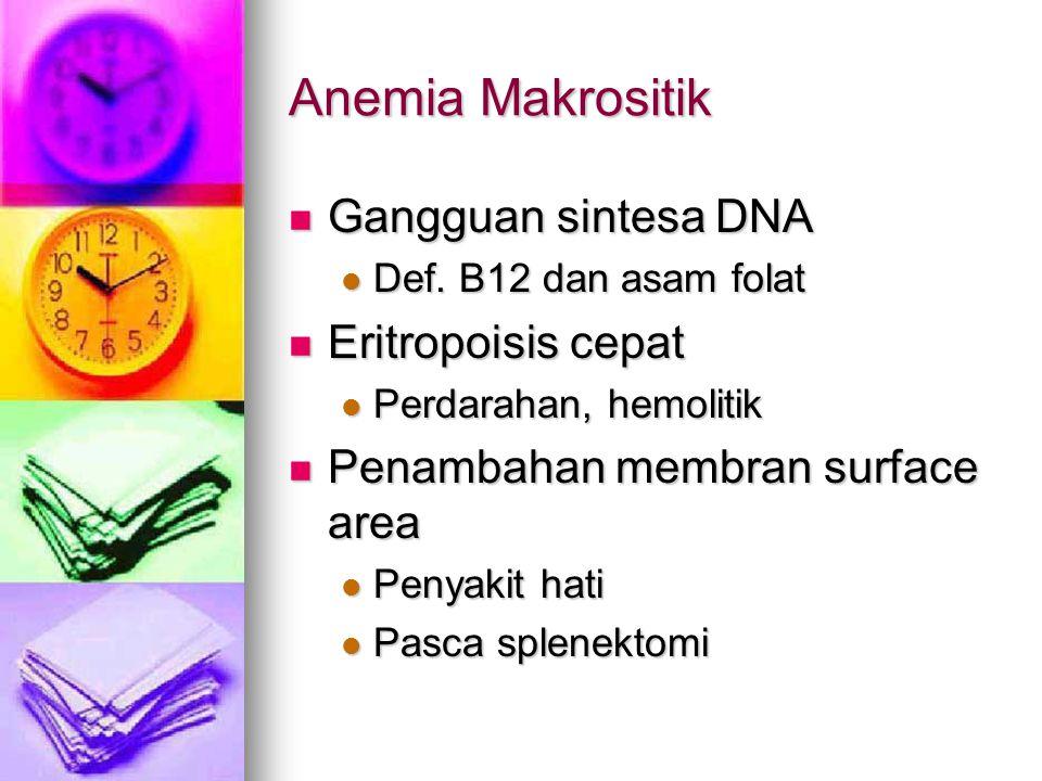 Anemia Makrositik Gangguan sintesa DNA Eritropoisis cepat