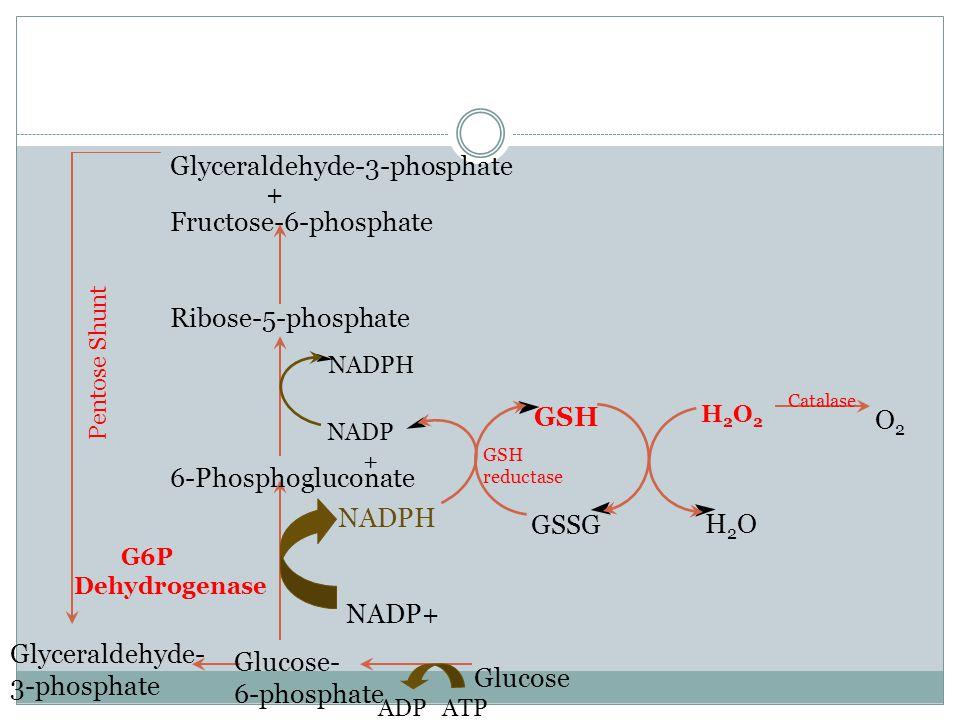 Glyceraldehyde-3-phosphate + Fructose-6-phosphate
