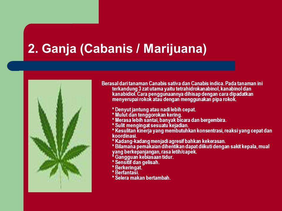 2. Ganja (Cabanis / Marijuana)