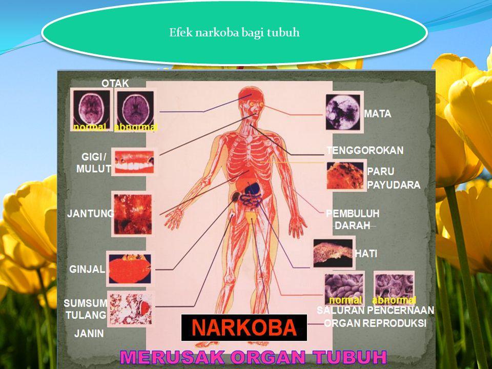 Efek narkoba bagi tubuh