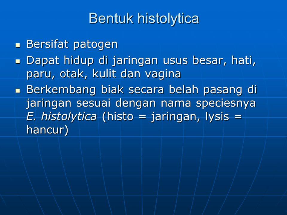 Bentuk histolytica Bersifat patogen