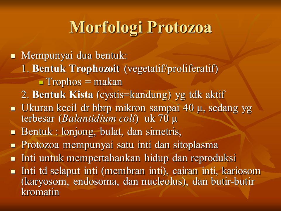 Morfologi Protozoa Mempunyai dua bentuk: