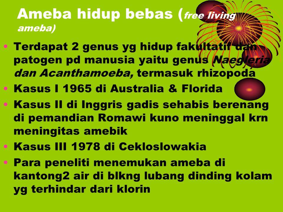 Ameba hidup bebas (free living ameba)