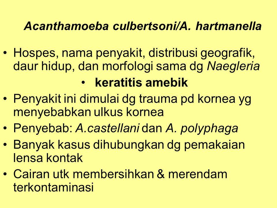 Acanthamoeba culbertsoni/A. hartmanella