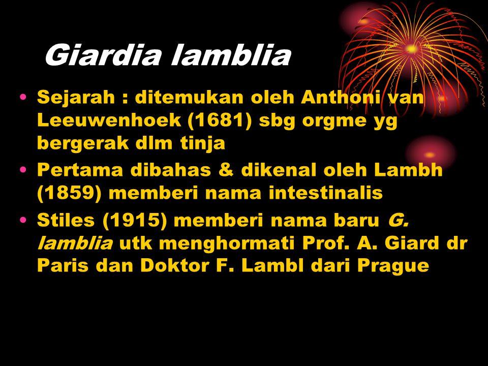 Giardia lamblia Sejarah : ditemukan oleh Anthoni van Leeuwenhoek (1681) sbg orgme yg bergerak dlm tinja.