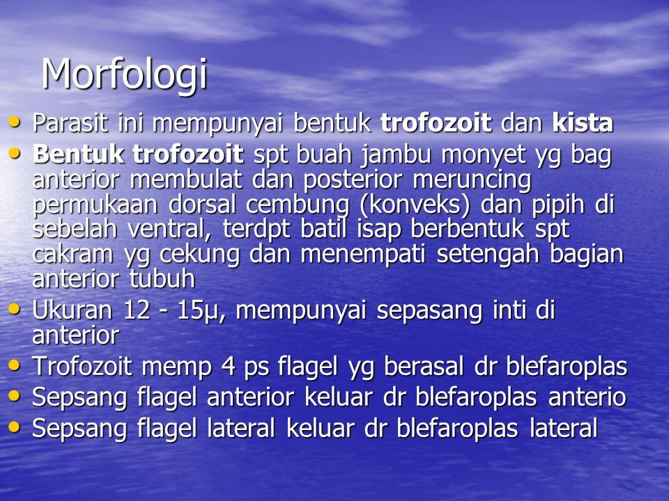 Morfologi Parasit ini mempunyai bentuk trofozoit dan kista