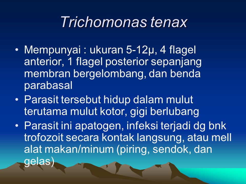 Trichomonas tenax Mempunyai : ukuran 5-12µ, 4 flagel anterior, 1 flagel posterior sepanjang membran bergelombang, dan benda parabasal.