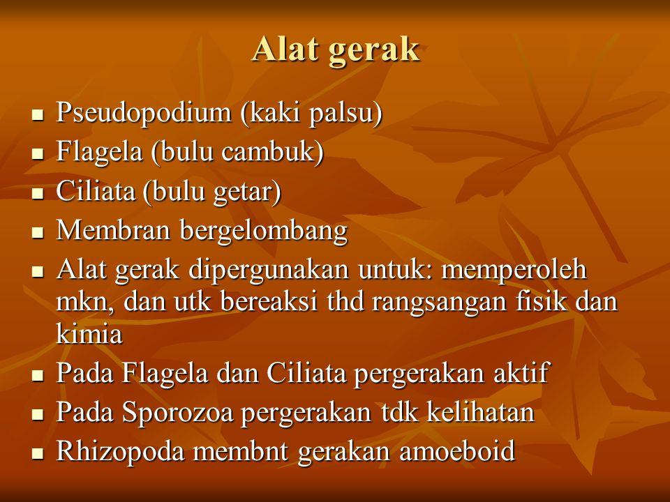 Alat gerak Pseudopodium (kaki palsu) Flagela (bulu cambuk)