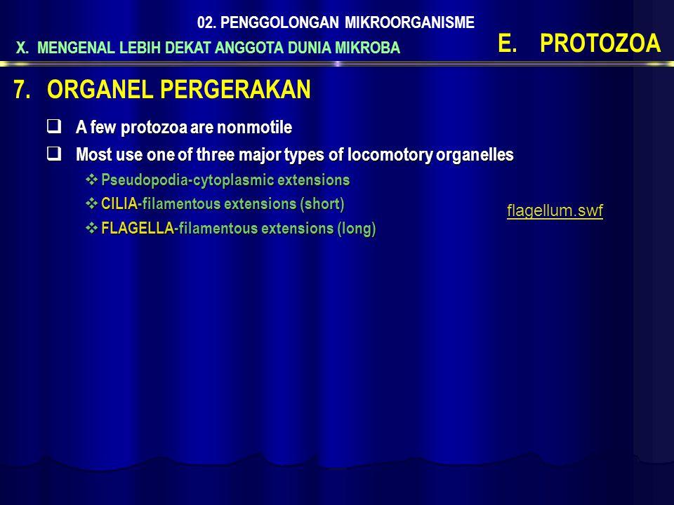 PROTOZOA ORGANEL PERGERAKAN A few protozoa are nonmotile