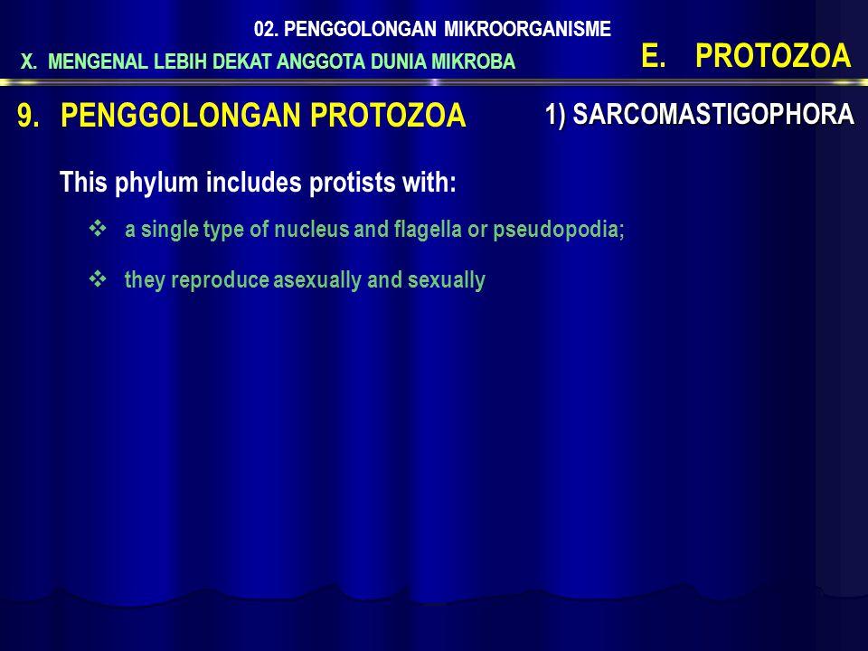 PENGGOLONGAN PROTOZOA