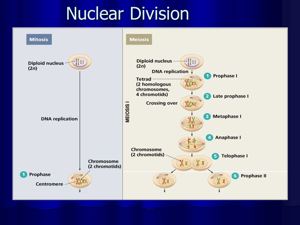 Nuclear Division