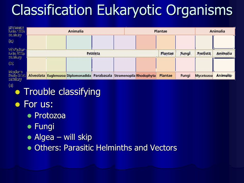 Classification Eukaryotic Organisms