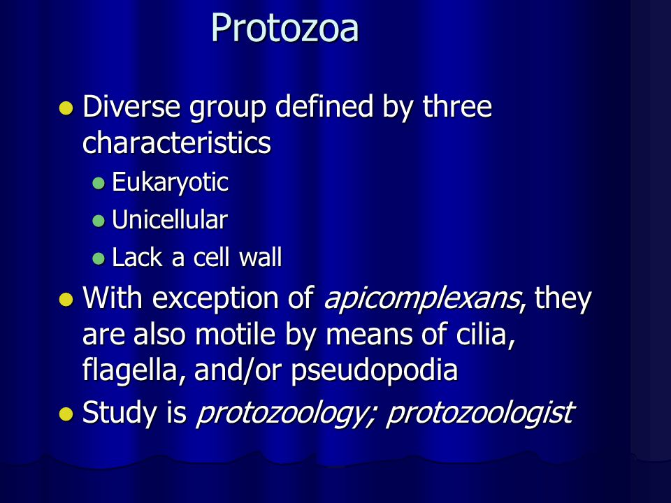 Protozoa Diverse group defined by three characteristics
