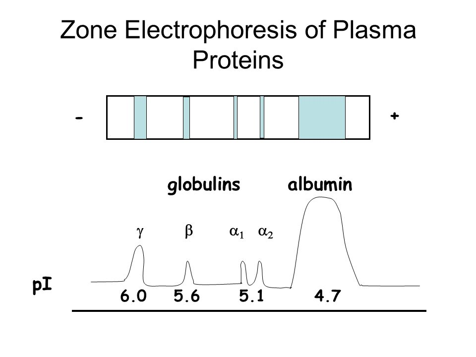 Zone Electrophoresis of Plasma Proteins