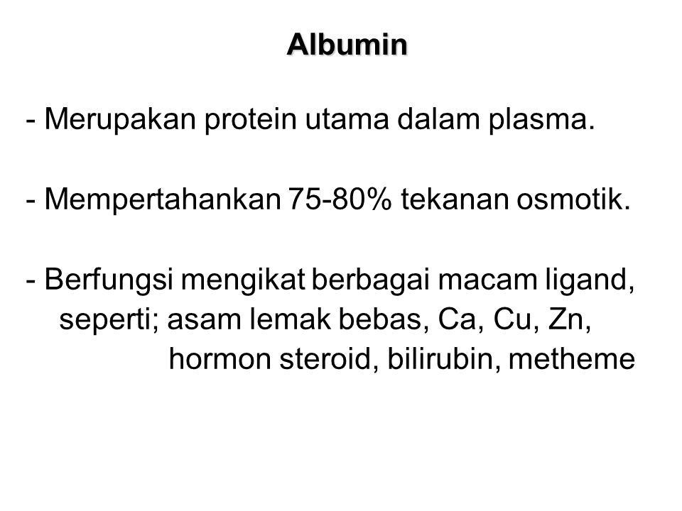 Albumin - Merupakan protein utama dalam plasma. - Mempertahankan 75-80% tekanan osmotik. - Berfungsi mengikat berbagai macam ligand,