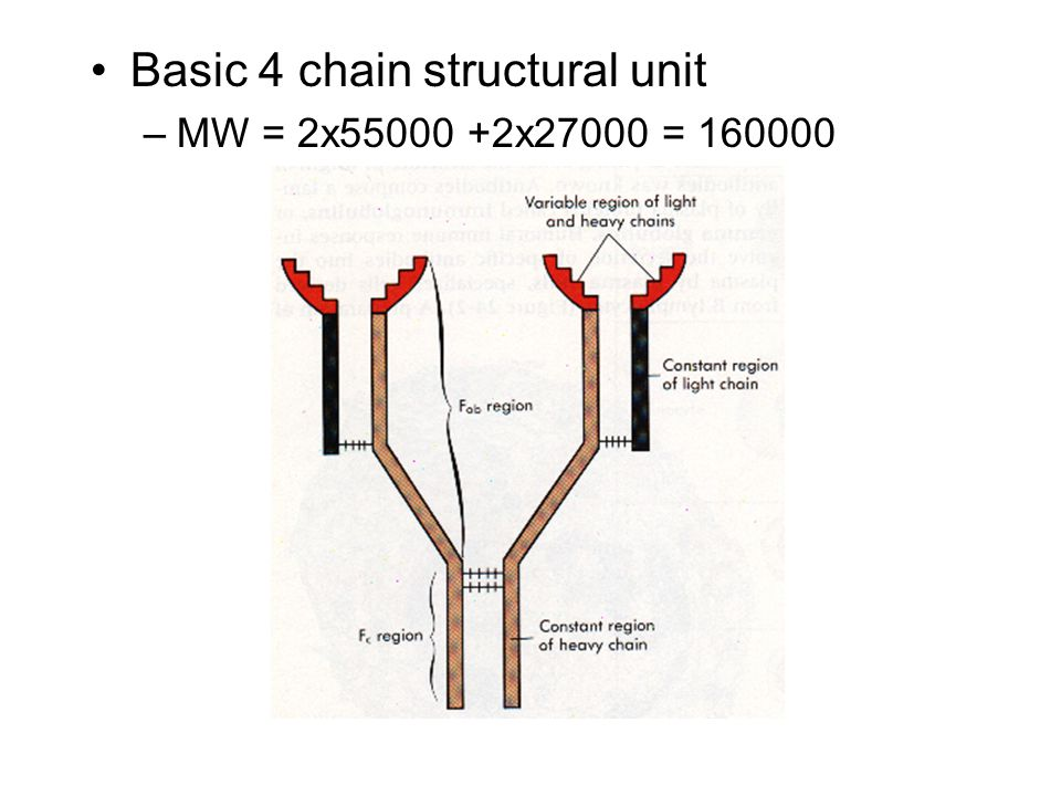 Basic 4 chain structural unit