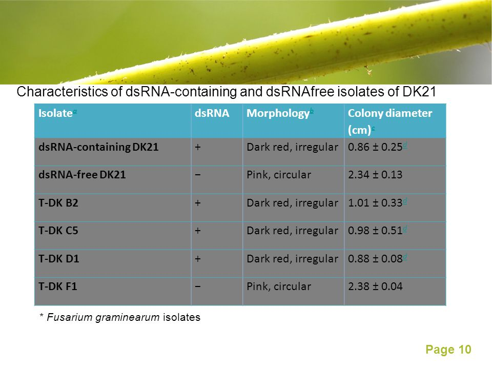 Characteristics of dsRNA-containing and dsRNAfree isolates of DK21
