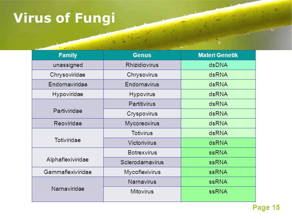 Virus of Fungi Family Genus Materi Genetik unassigned Rhizidiovirus