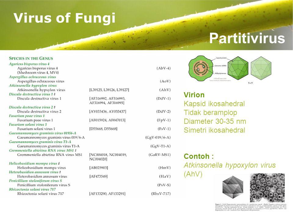 Partitivirus Virus of Fungi Virion Kapsid ikosahedral Tidak beramplop