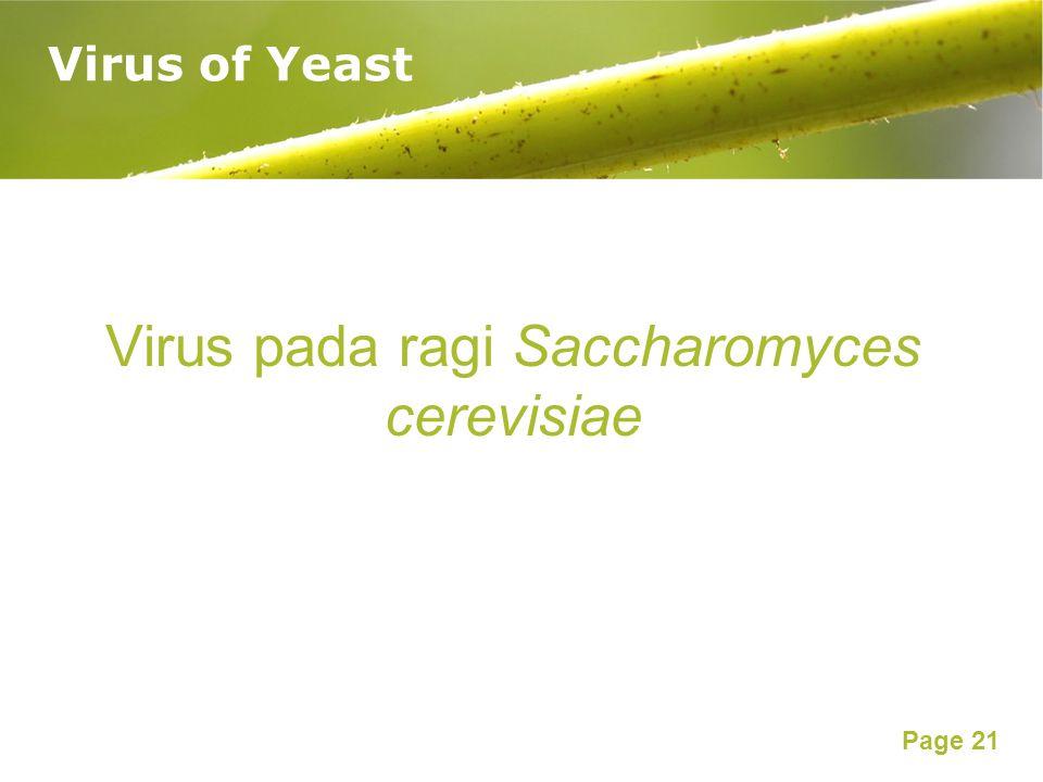 Virus pada ragi Saccharomyces cerevisiae