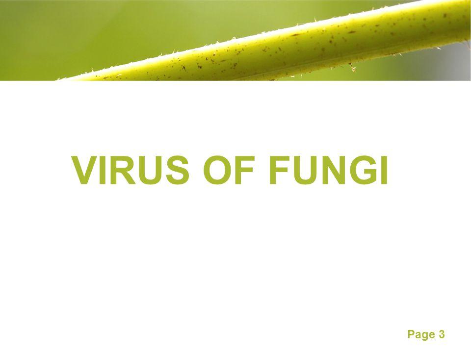 VIRUS OF FUNGI