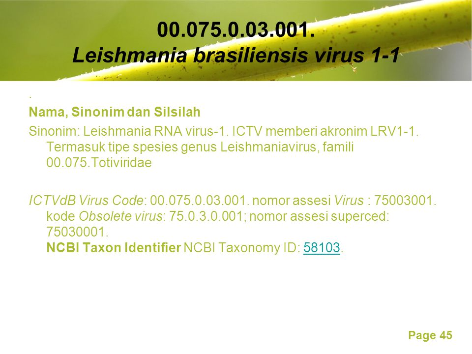 00.075.0.03.001. Leishmania brasiliensis virus 1-1