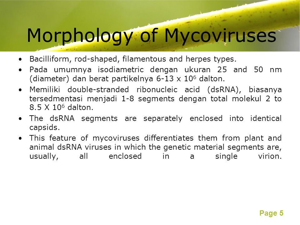 Morphology of Mycoviruses