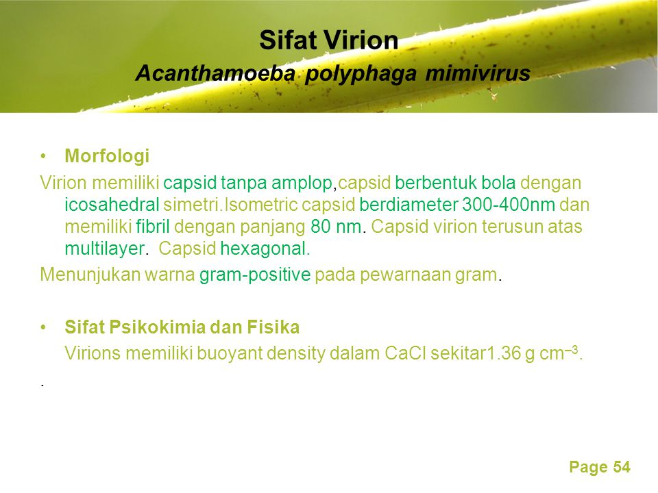 Sifat Virion Acanthamoeba polyphaga mimivirus